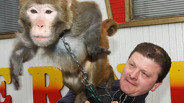 Ředitel cirkusu Bernes Ludvík Berousek a makak Chicko, kterému se zjevně zalíbil redakční fotograf Českokrumlovského deníku.