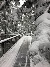 Stezka korunami stromů zapadává sněhem, ale je otevřená celoročně, a tak lipenští zaměstnanci začali odhrnovat.