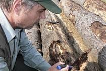 Množství kůrovcem napadeného smrkového dřeva je letos v některých částech regionu enormní. Jinde hlásí setrvalý stav.