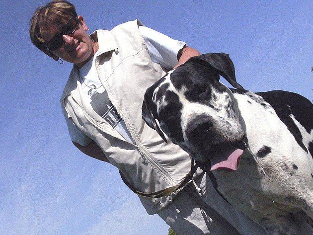 Když se černobílý Chad (čti čad) postaví na zadní, je vyšší, než jeho panička Renata Hálová (oba na snímku). V klidu na všech čtyřech nohách je doga v kohoutku (u lopatek) vysoká 85 centimetrů. Přední packy ale zvedne takřka ke dvěma merům vysoko.