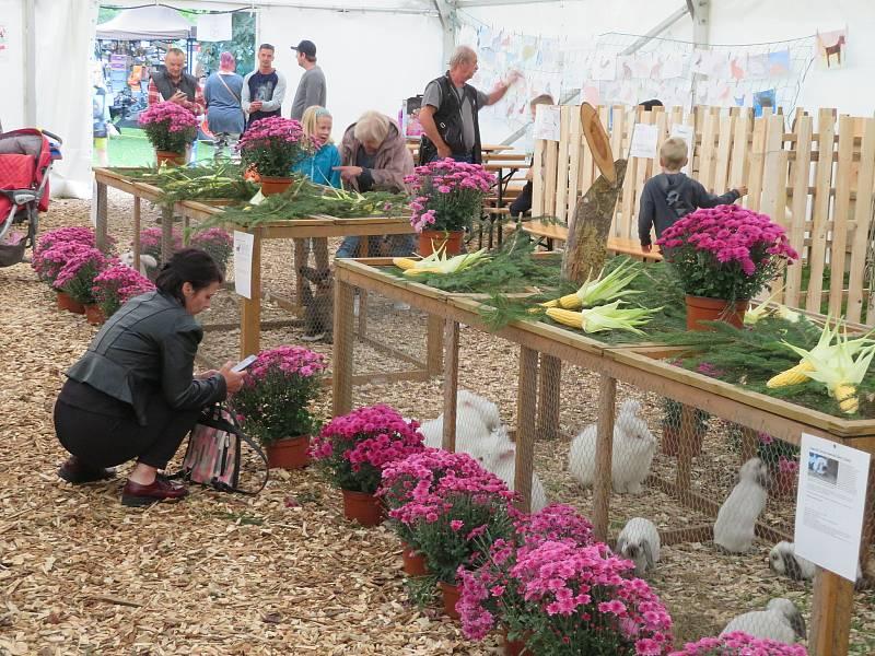 Chovatelská výstava v městském parku v Kaplici nabízí od pátku 17. do soboty 18. září bohatý program pro všechny generace.