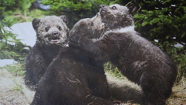 Medvědí odpoledne v krumlovské knihovně