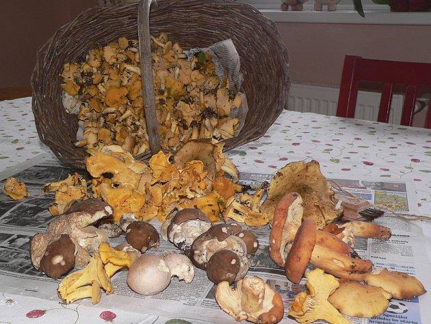 Tak to je celý můj houbařský úlovek.