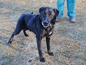 Togo je v útulku už 3,5 roku. Je to akční pes a rád aportuje. K lidem se chová přátelsky, ale s ostatními zvířaty nevychází, musí být jediný pes v rodině.
