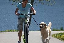 O letošní novinky z půjčoven sportovního vybavení na Lipensku mají majitelé psů veliký zájem. Přívěsným vozíkům za bicykly i speciálním adaptérům s vodítky přišli na chuť nejen Češi, ale také zahraniční turisté.