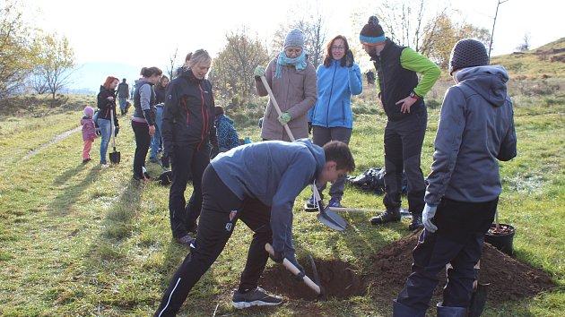 Desítky lidí sázely sedmdesát stromků třešní