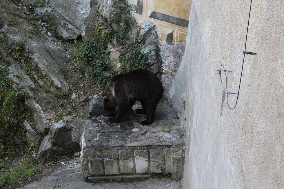 Na medvíďata se přijel podívat ministr životního prostředí Richard Brabec, ředitel ZOO Olomouc Radomír Habáň i dlouholetý medvědářův kamarád Václav Chaloupek.