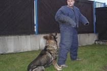 Hlídání výtržníka, přesněji řečeno figuranta Václava Ondřicha policejním  psem  Tamarem.