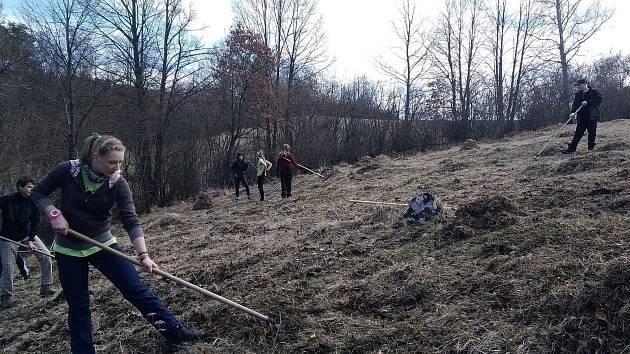 Studenti z přírodovědného kroužku budějovického Gymnázia J. V. Jirsíka vyhrabávali stařinu a mech na lokalitě ve Vyšenských kopcích, kde roste kriticky ohrožený hořeček český.