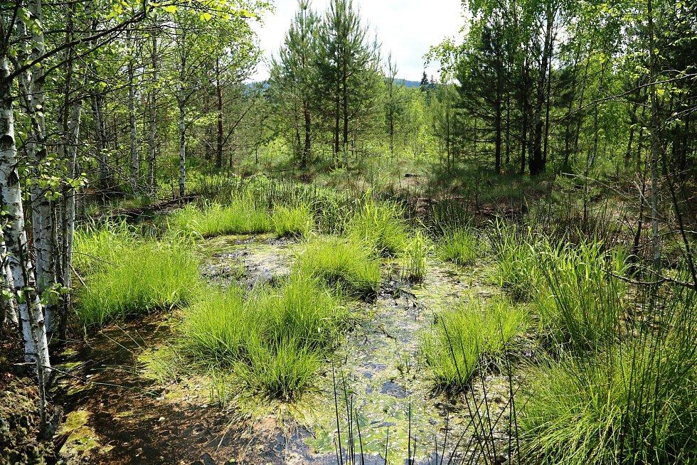 Rašeliniště na Lipensku