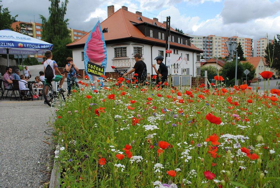 Květnaté ostrůvky ve Větřní, zářící všemi barvami, zdobí centrum města.