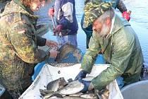 Kapličtí sportovní rybáři při výlovu.