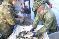 Třídění vytažených ryb.