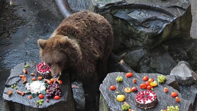 Mmadí medvědi netuší, co zažijí o silvestrovské noci.