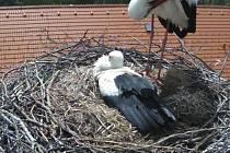 Pohled do čapího hnízda v Malontech.
