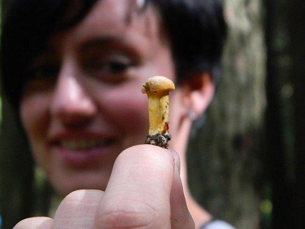 Tohle si pamatuji ještě z dětských houbařských výprav ty malé nesbírat, nechat vyrůst. Jenže tahle byla tak fotogenická.