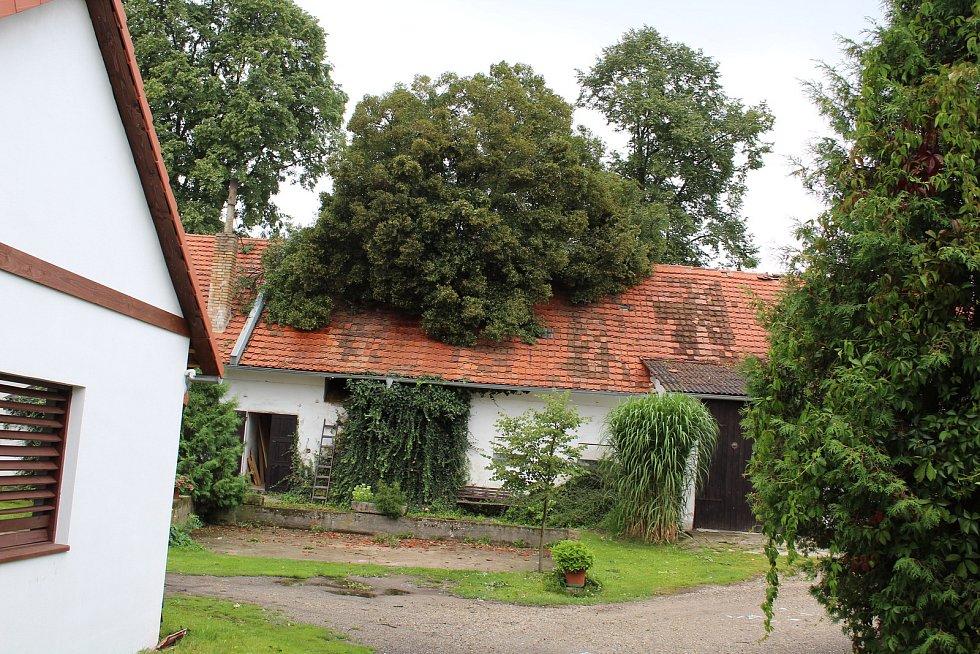 Stromy popadaly na železniční trať, například ve Velešíně Nádraží, strom spadl na stavení v Markvarticích, stromy ale padaly v celém regionu. V parcích je po stromy nastláno větvemi, jako třeba na návsi v Mojném.