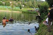 Rybník na Horní Bráně je jedním z míst, kde režisér Václav Marhoul natáčí Nabarvené ptáče.