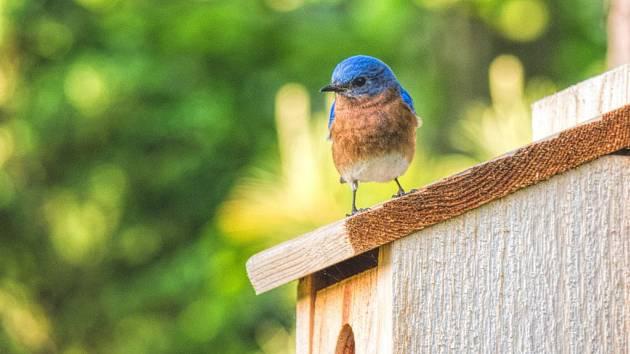Na ptačí stezce na lipenské stezce korunami stromů.