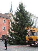 Od úterního dopoledne stojí na krumlovském náměstí Svornosti krásný vánoční smrk, který městu věnovala rodina Sirových ze Spolí.