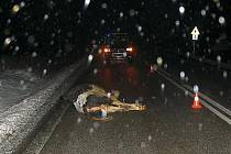 Toho se určitě řidič poškozeného vozu nenadál, že na silnici E 55 narazí do krávy.
