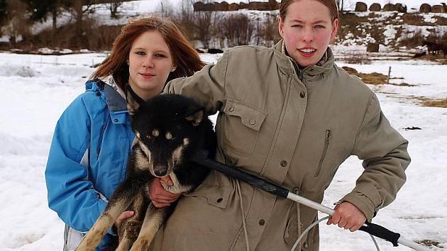 Do nového domova stěhovali v pondělí opuštěné psy z Mostek u Kaplice pracovníci psího domova v Lukavici u Rychnova nad Kněžnou.