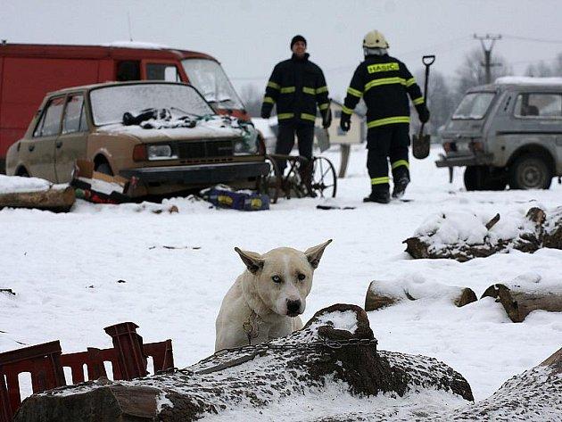 Pes na snímku byl uvázaný, třásl se zimou a z lidí měl velký respekt.