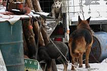 Nějakou chvíli policistům a kynologům trvalo, než se k autobusu přes smečku vyhladovělých zvířat dostali.
