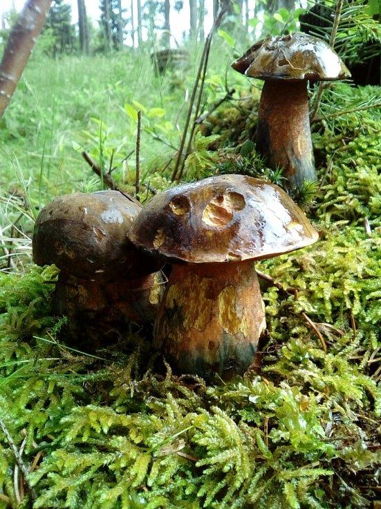 Jan Cipín našel v lese ve Větřní třináct kovářů.