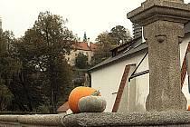 Rozmanité dýně zdobí Rožmberk nad Vltavou.