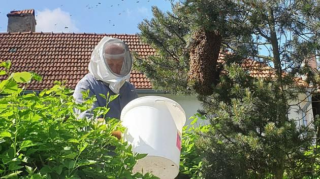 Včelí roj se usadil přímo na návsi v Přídolí.