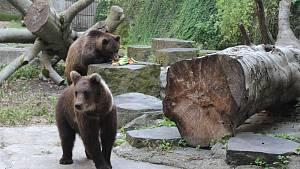 Medvíďata už v Krumlově řádí ve výběhu
