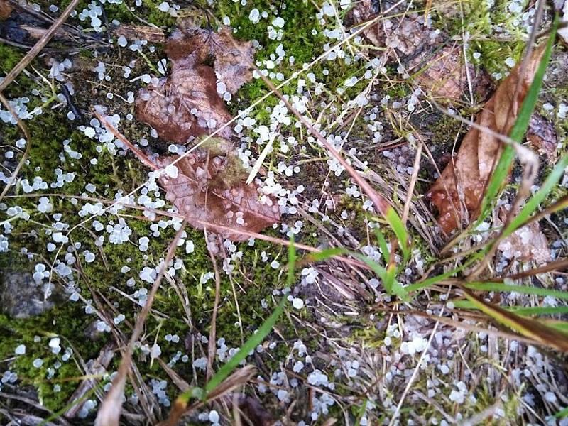 Na Kleti napadlo v přeháňce pár sněhových krupek, teplota se držela nad nulou.