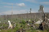 Takto vypadají některá místa Šumavy po nájezdu lýkožrouta už nyní.