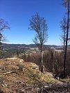 Z bezmála třicetimetrové rozhledny na Hradišťském vrchu uvidíte za dobrých podmínek i Alpy a Plechý.