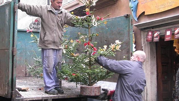 Zaměstnanci Služeb města rozvážejí po městě vánoční stromky.