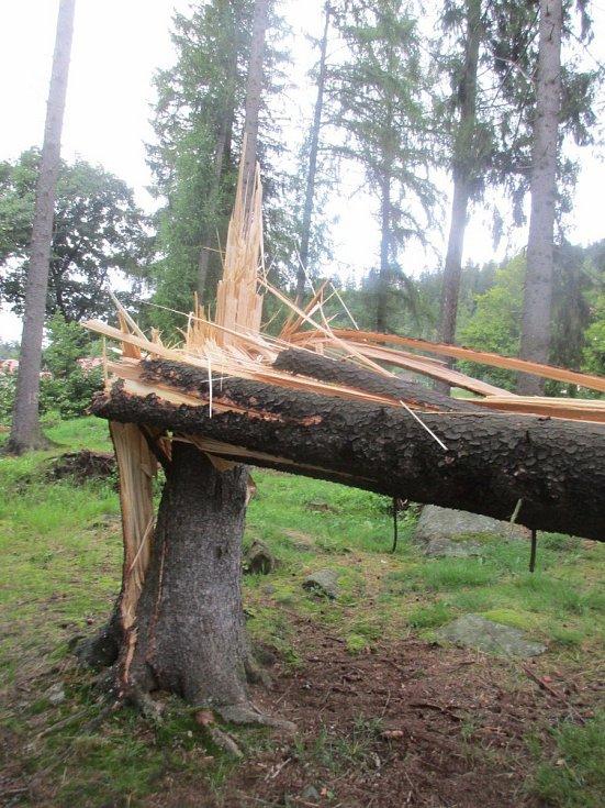 Silný vítr vyvrátil stromy v parku kolem bývalé Porákovy vily v Loučovicích.