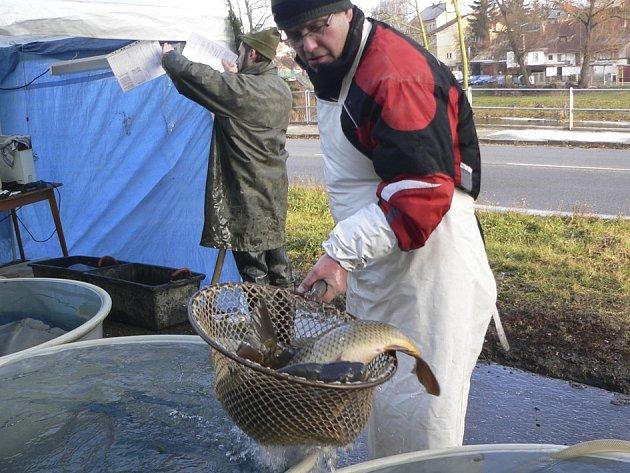 Prodej ryb začal. Novohradské kapry si například můžete zakoupit před Skleníkem na Plešivci v Českém Krumlově.