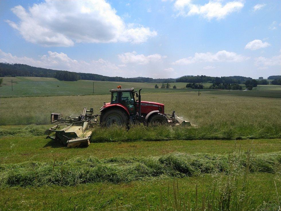 Ročně v České republice zbytečně při traktorovém sečení umírá asi 60 tisíc srnčat.