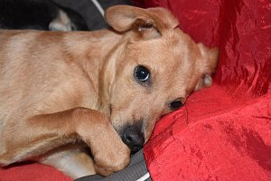 Nekupujte psy bez papírů, ale adoptujte
