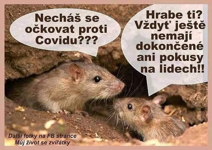 Vtipy na únorový vývoj doby koronavirové, které kolují po internetu.
