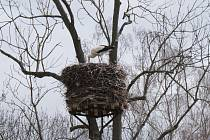 Čáp se opět vrátil na své hnízdo v Horním Třeboníně.