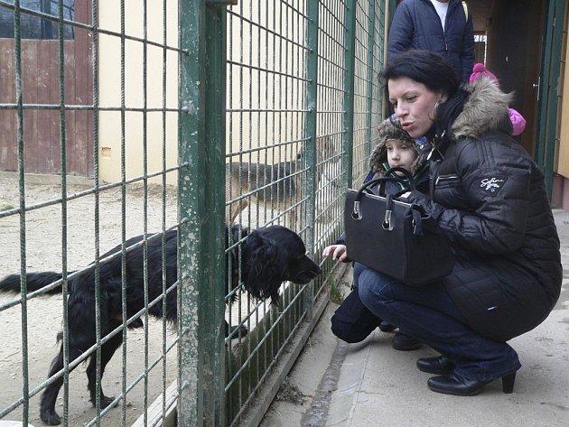 Psí Vánoce v českokrumlovském útulku pro opuštěná zvířata.
