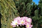 Podzim umí rozveselit třeba barevné kvítky.