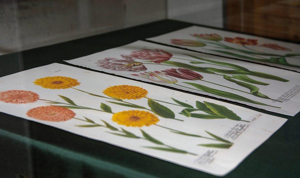Faksimile květin z díla Phytanthoza iconographia.