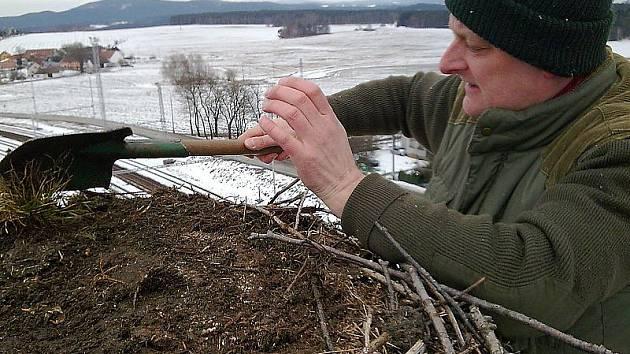 Tak takhle to vypadá v čapím hnízdě. Čas od času je třeba čápům pomoci hnízdo uklidit. Na snímku je při práci Jiří Růžička.