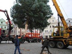 Vánoční strom pro Krumlov doputoval z Nahořan.