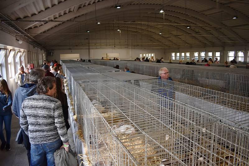 Výstava hospodářských zvířat v Přerově v říjnu 2021.