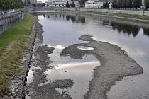 Od nánosů štěrkopísku čistí v těchto dnech koryto řeky Bečvy v Přerově pracovníci Povodí Moravy.