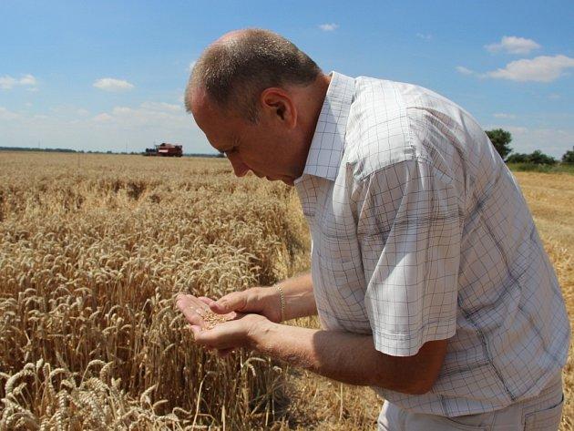 Letošní úrodu na Hané poznamenalo velké sucho – pro sklizeň je sice počasí ideální, ale zrno má menší velikost.